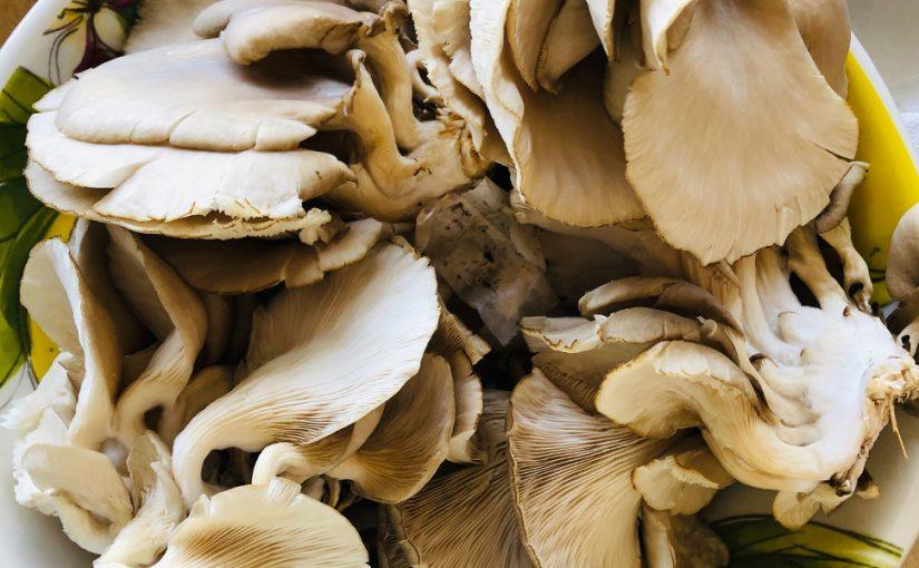 Mushrooms & Vitamin D